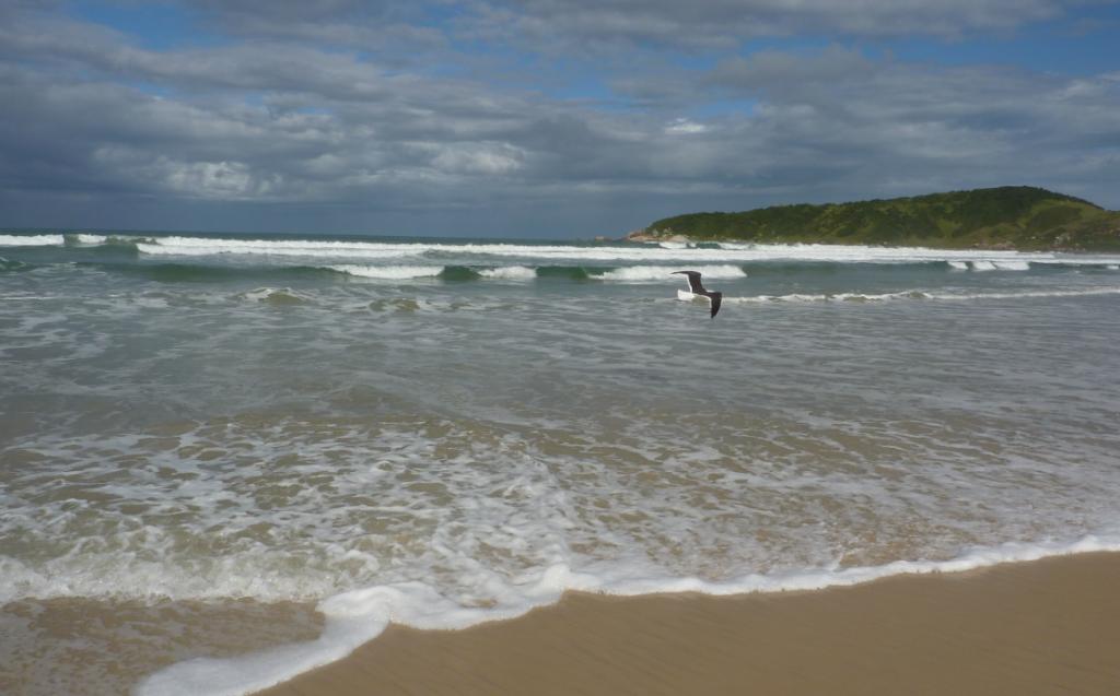 2014-04 - Praia do Rosa - P1120854 - Corte